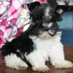Xmas and puppies 143