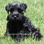 last spring pups 008