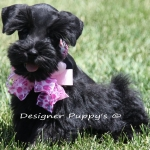 last spring pups 030