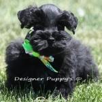 last spring pups 040