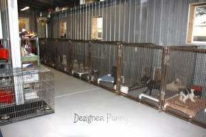 Interior of Miniature Schnauzer Breeder Kennel