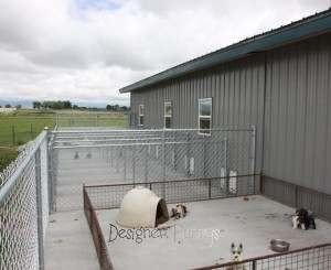 Outdoor View of Miniature Schnauzer Breeder Dog House