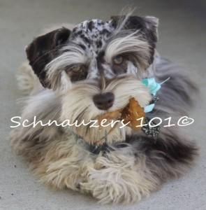 Fall 3 pups 060