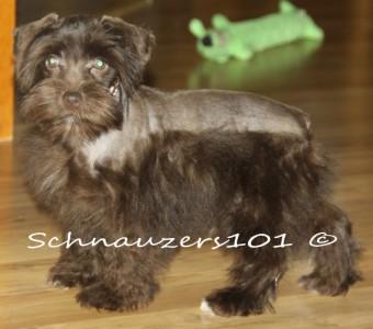 Rembrandt & Fusion pups 007